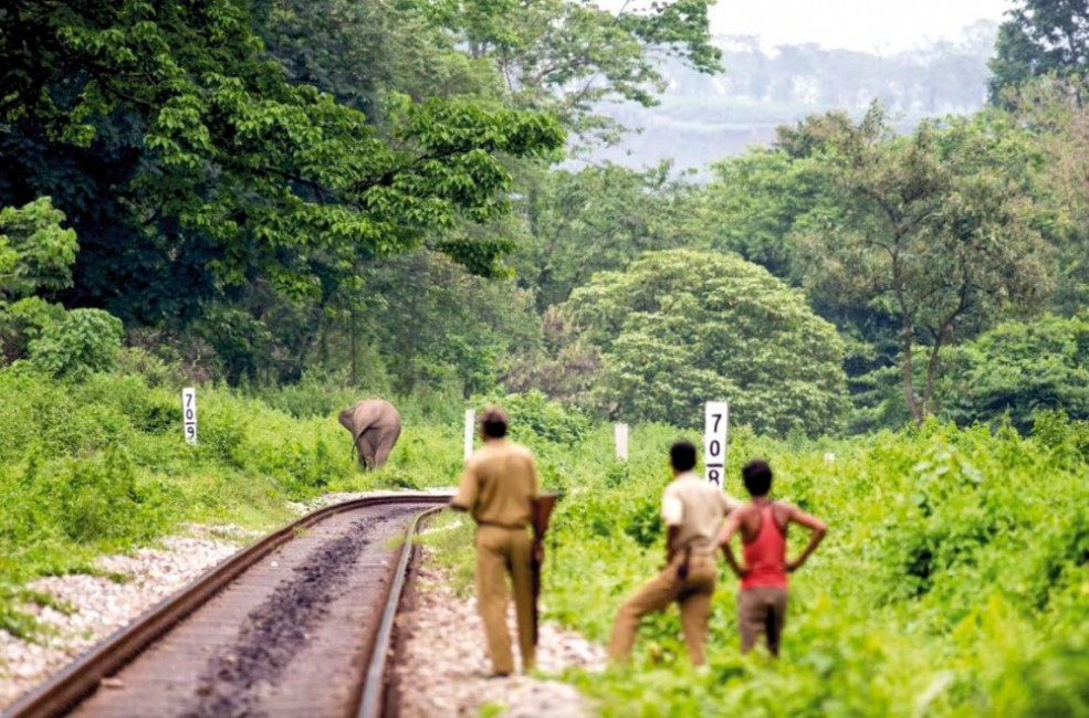 forest watchers track.jpg