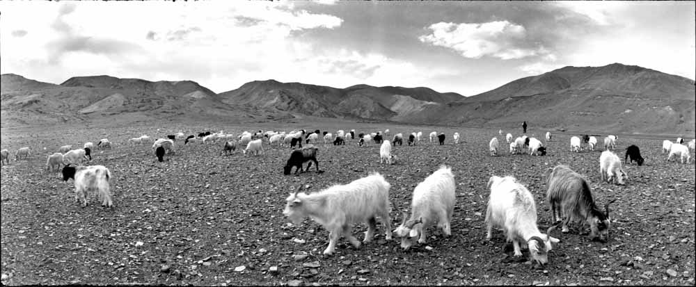 The shepherds of Changthang 9